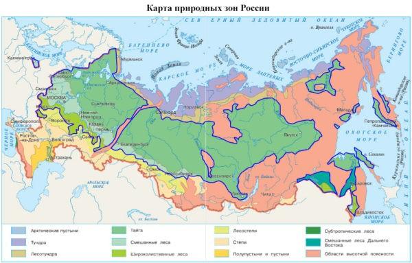 Леса России - Плешаков 4 класс 1 часть. Учебник