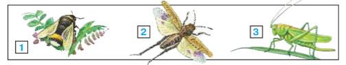 Зона степей - Плешаков 4 класс 1 часть. Учебник