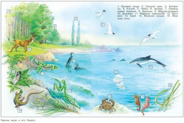 У Чёрного моря - Плешаков 4 класс 1 часть. Учебник